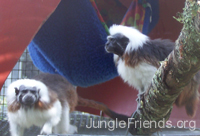 Ashley and Odin, JungleFriends.org