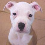 Innocent pup