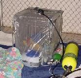 Buddie's oxygen tent