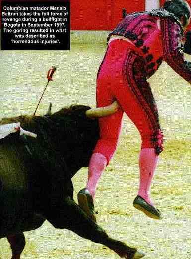dangerous bull