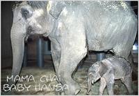 Mama Chai & Baby Hansa 2000