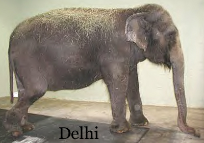 Delhi at The Elephant Sanctuary