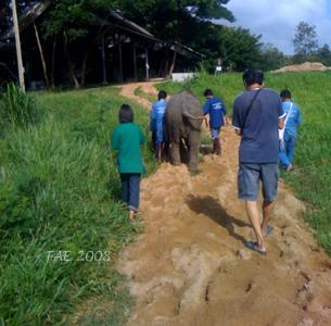 Mosha's Longest Walk