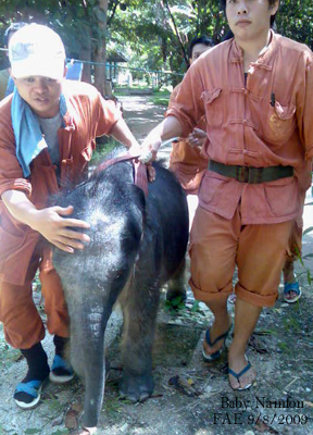Baby Namfon being escorted down to the Baby Nursery next to Motala