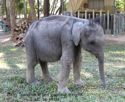Baby Namfon is not gaining weight