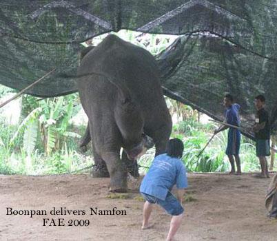 Boonpan Delivers Namfon