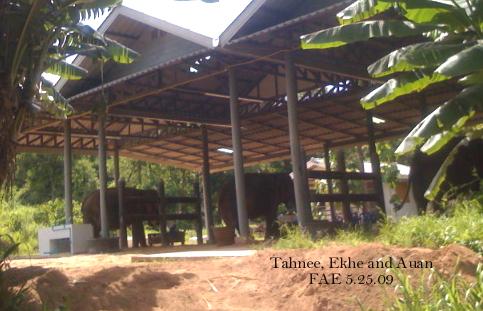 Tahnee, Ekhe, Auan 5/25/2009 FAE