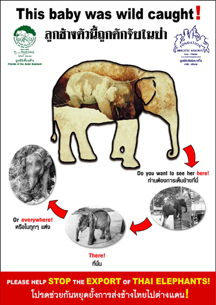 Friends of the Asian Elephant (FAE) Poster