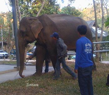 Jintara, FAE. 1.17.09
