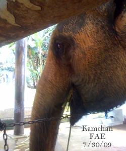 Kamchan July 30. 2009