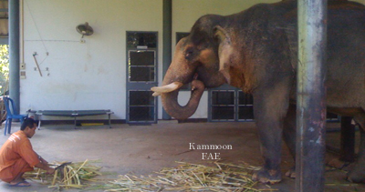 Kammoon left on Monday, 11/13/09