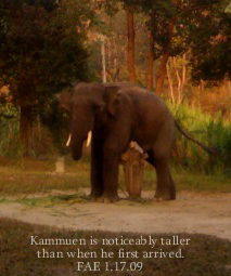 Kammuen. FAE. January 2009