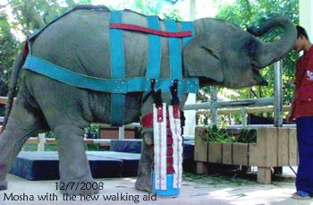 Mosha's Newest Walking Aid