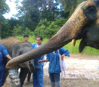 Mosha and Motala @ Friends of the Asian Elephant 2008
