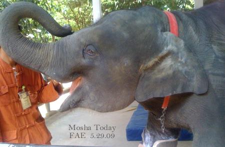 Mosha May 25, 2009 FAE
