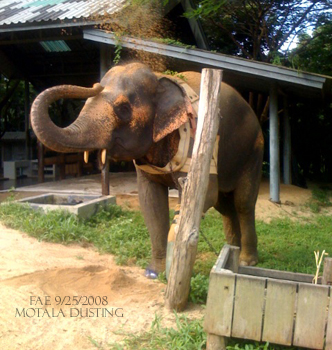 The lovely Motala dusts herself
