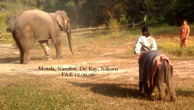 Motala, Namfon, Dr. Kay and Nikorn