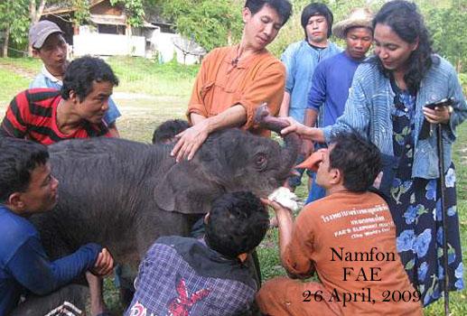 Namfon fed by syringe ball