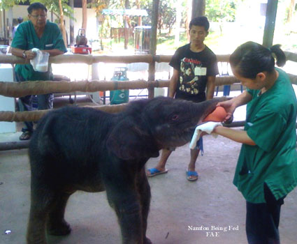 Namfon being fed  FAE