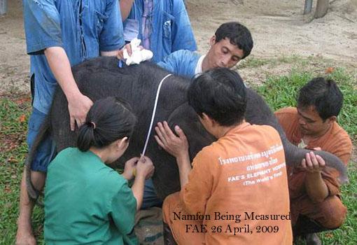 Namfon being measured