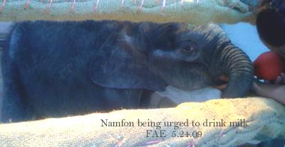 Namfon urged to drink FAE