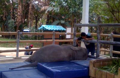 Mosha and Palahdee, nap time