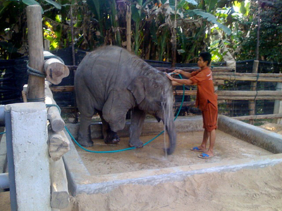 Mosha and Palahdee, shower time