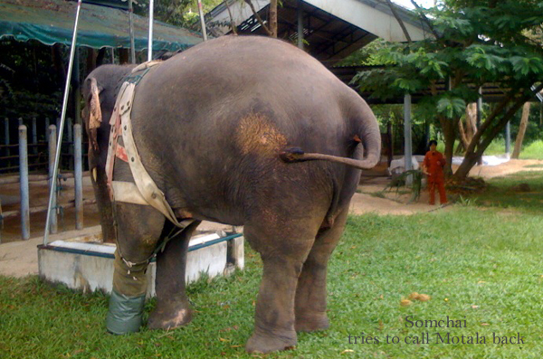 Somchai tries to call Motala back