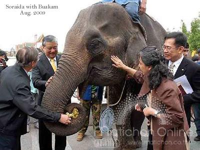 Soraida Salwala with Pung Baukam, blind elephant.