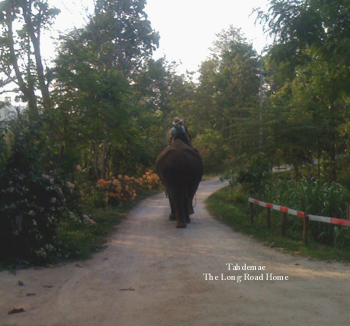 Tademae's long road home