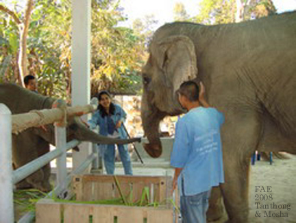 Tanthong and Mosha