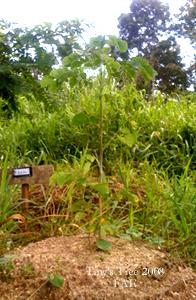 Tiny's Tree 2008