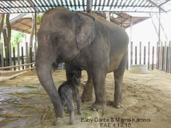 Baby Dante and Mama Kamnoi