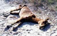 euthanized horse