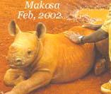 Makosa 2002