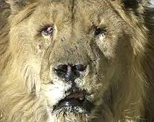 Marjan Kabul Zoo 2001