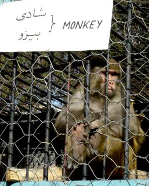 The Same Poor Monkey