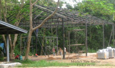 Mosha's New Shelter