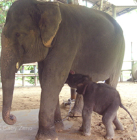 Kamprai and baby Zeno