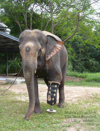 Motala's Prosthetic Has Been Repaired.. Aug. 22, 2009