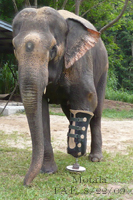 Motala's Prosthetic Has Been Repaired..Aug. 22, 2009