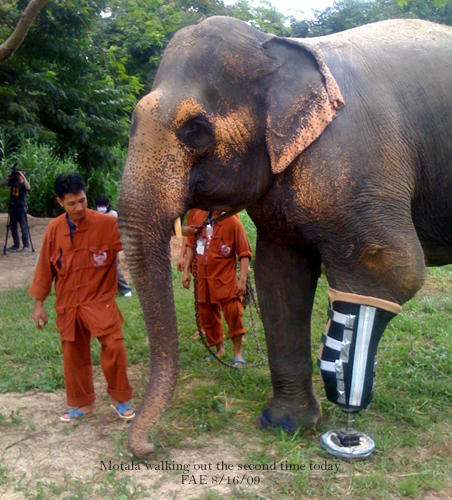 Motala walks for the second time