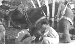 Motala's Sling. Source: Bankok Post