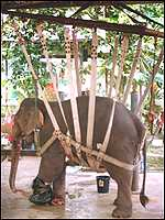 Motala's sling attached to crane
