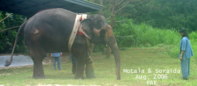 Motala and Soraida 2006