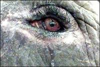 Motala's Tears