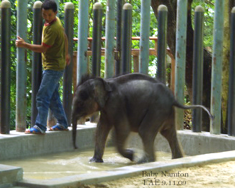 Namfon with her keeper, Chai