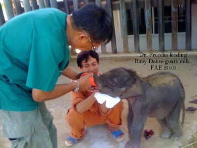 Dr. Preecha feeds Dante goats milk