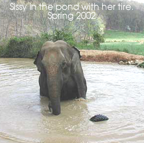 Sissy is no longer afraid of water
