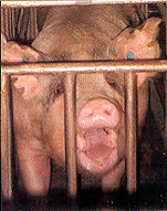 Sow, Not Free